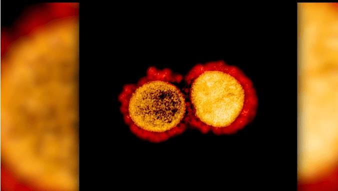 Gambar-Corona-Virus-2