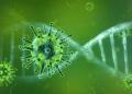 Gambar-Corona-Virus-4
